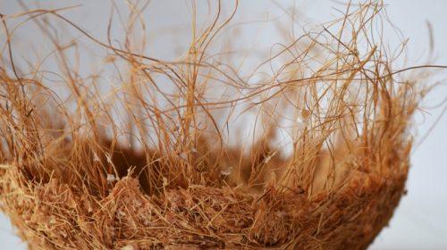 Schale aus Hanffasern und Bioklebstoff
